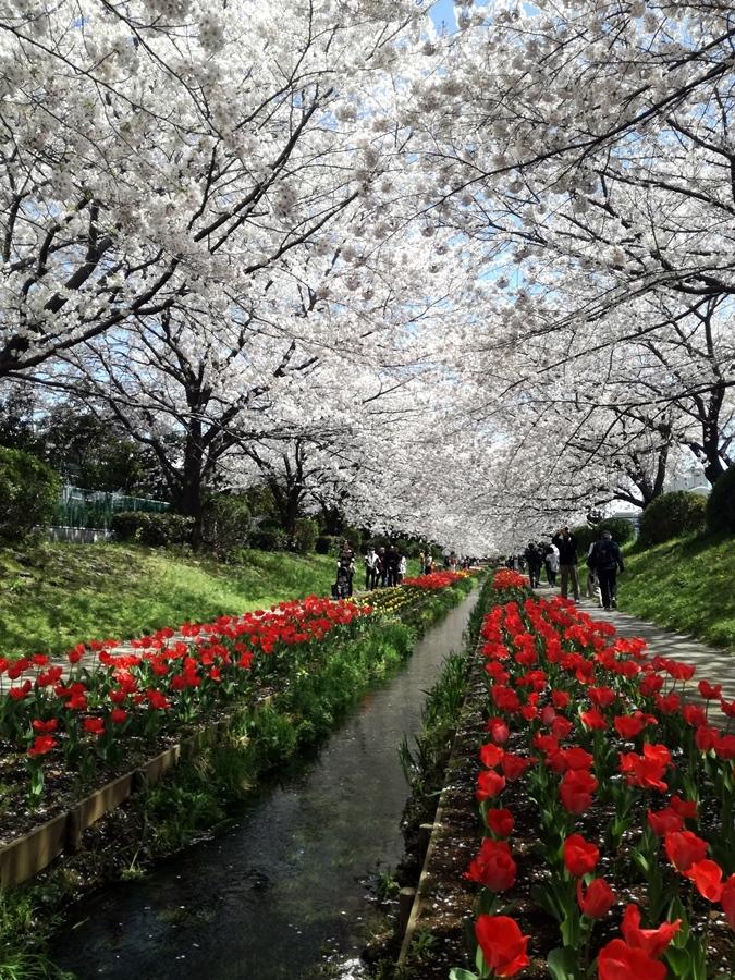 170412桜-09