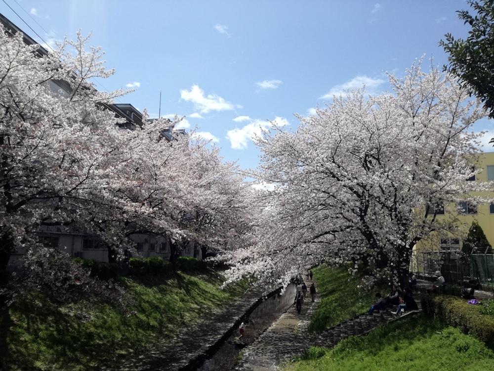 170412桜-11