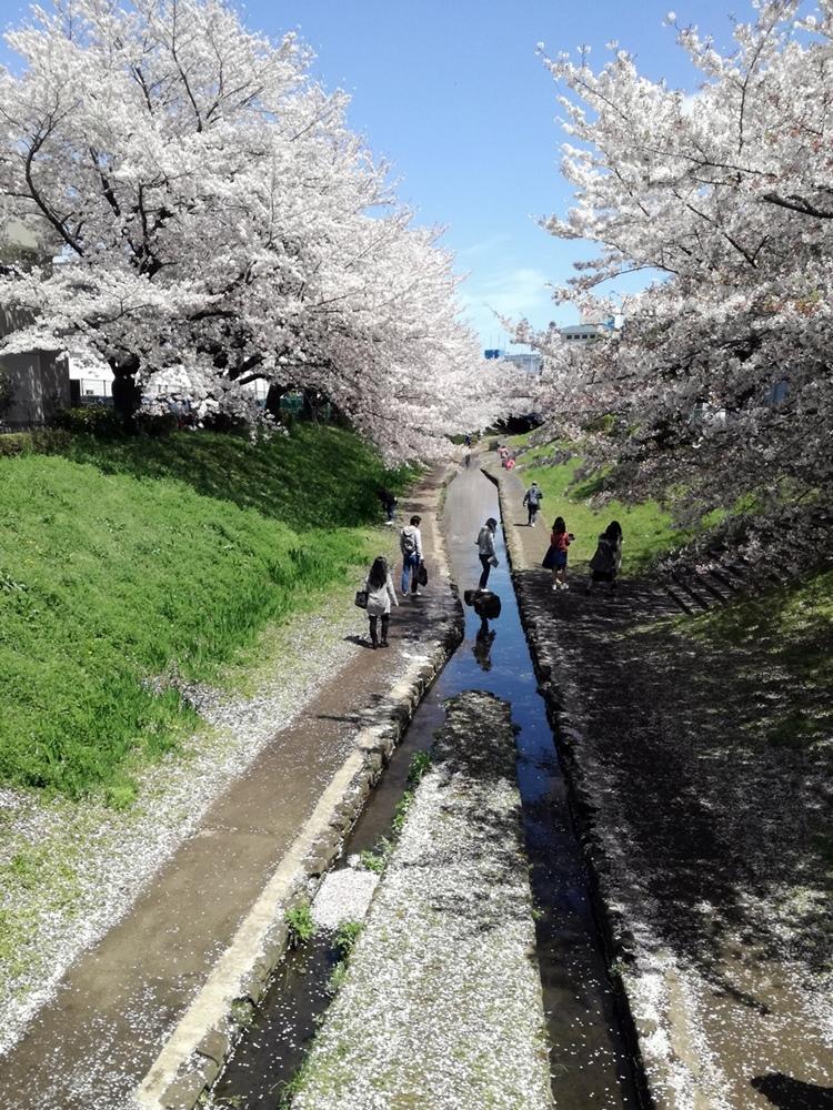 170412桜-12