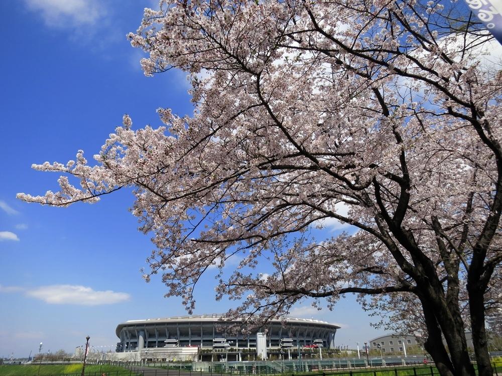 170413桜見納め-01