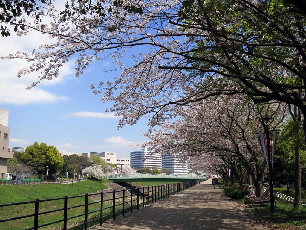 170413桜見納め-04
