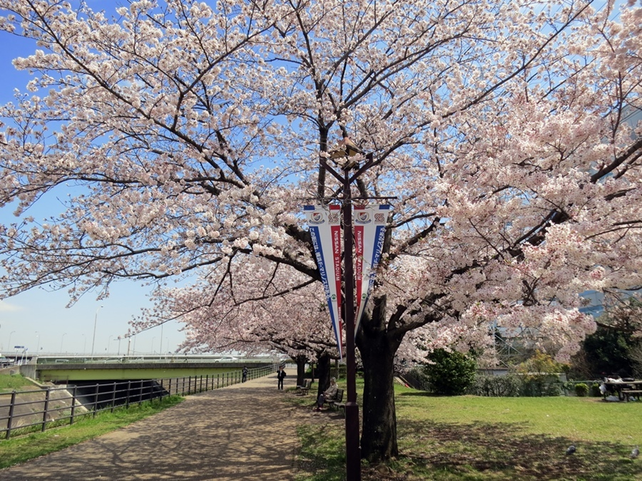 170413桜見納め-06