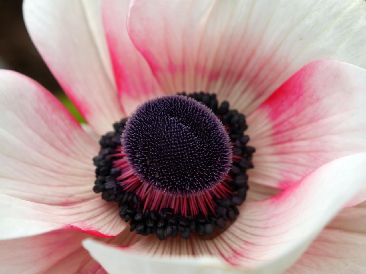 花マクロ2-02