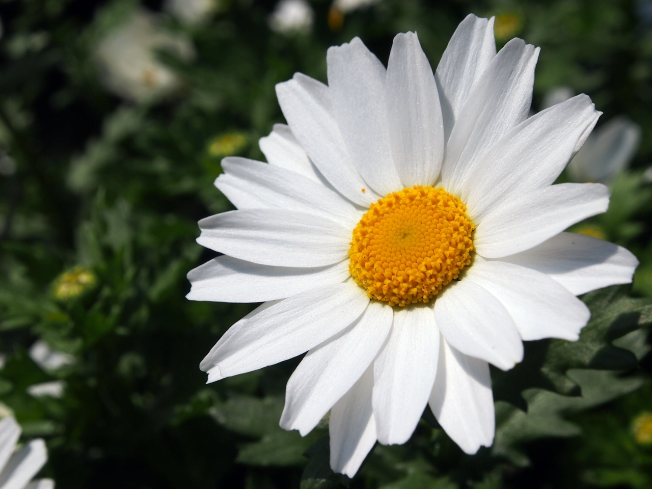花マクロ1-04