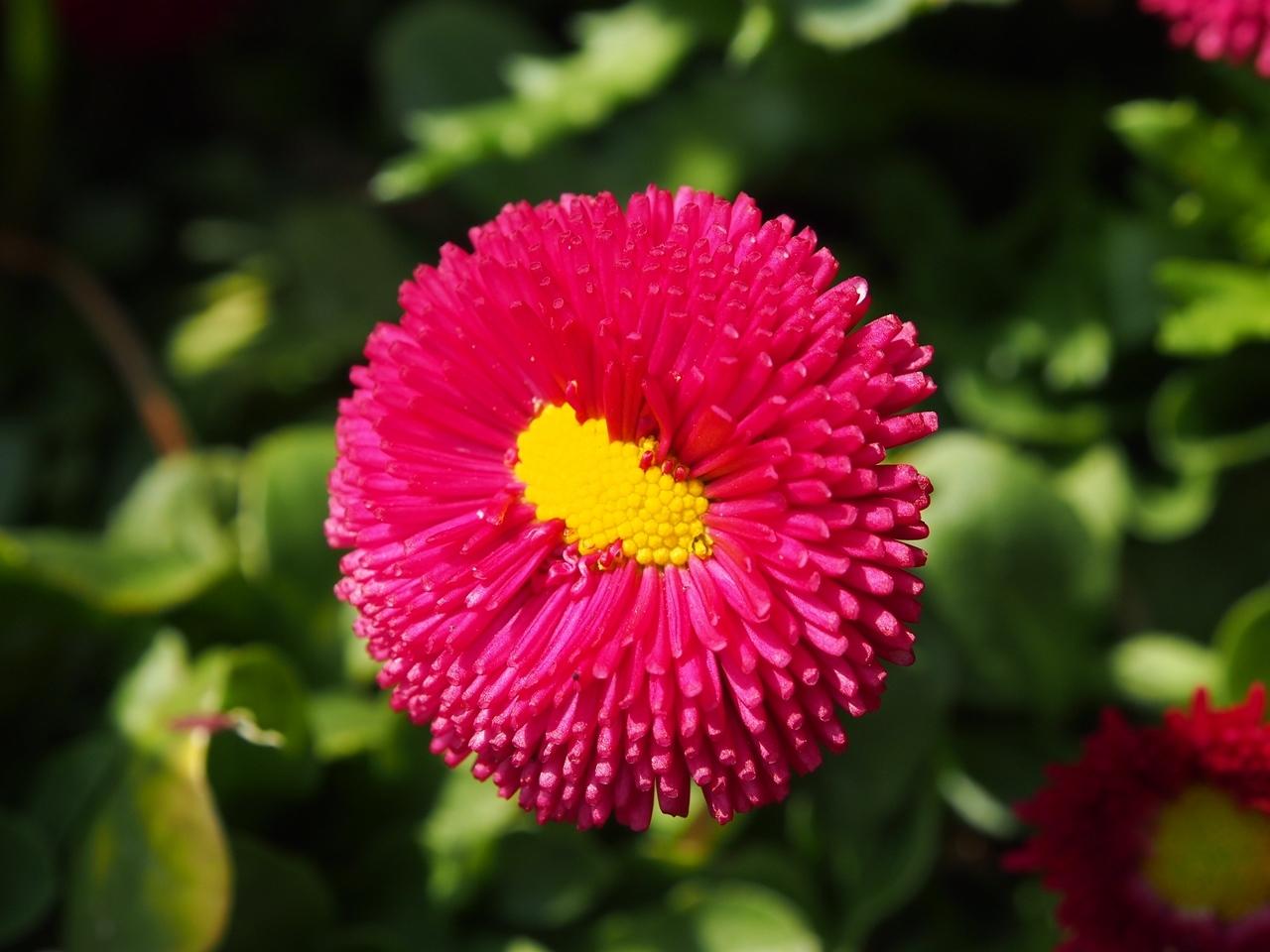花マクロ1-05