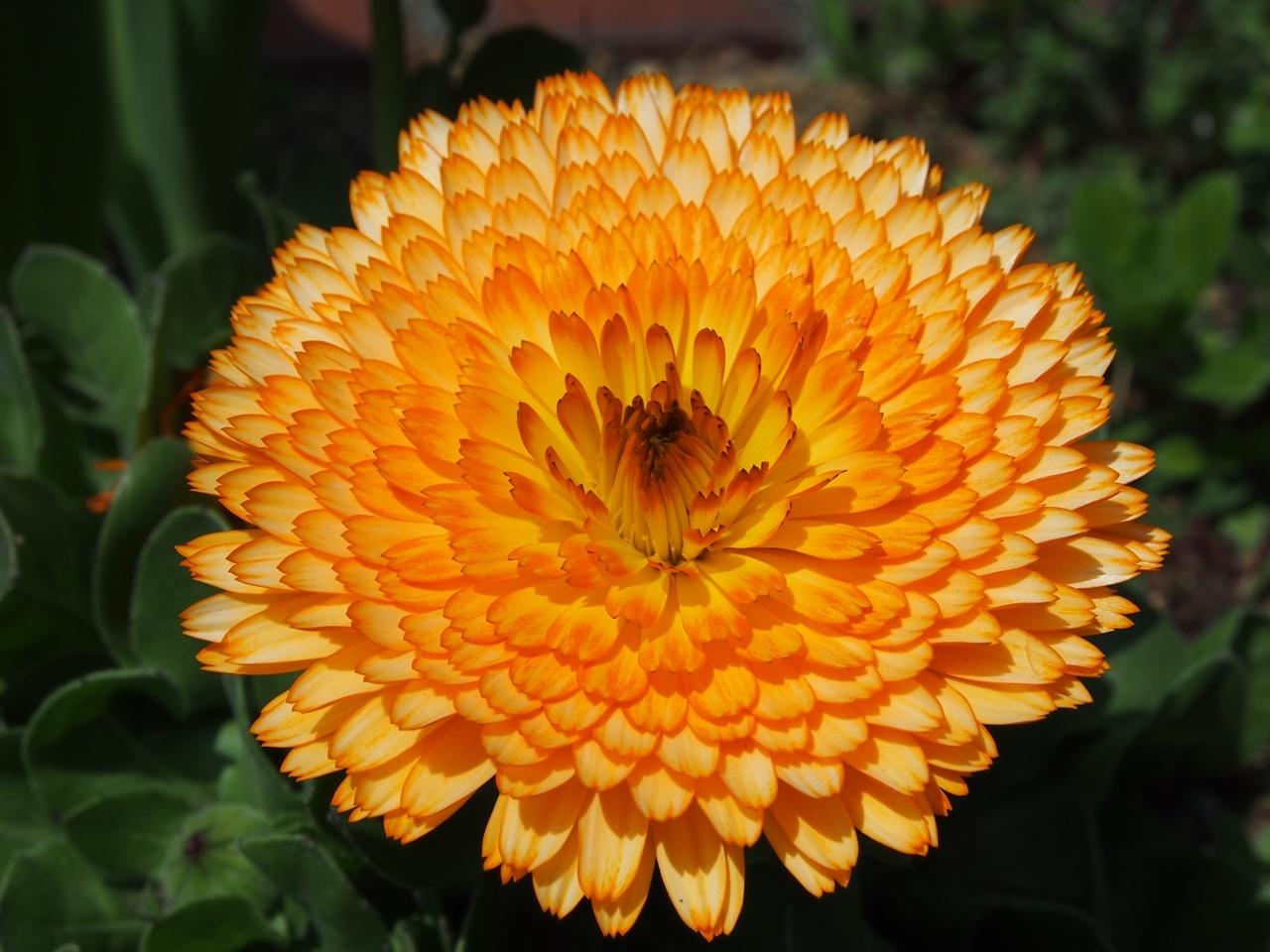 花マクロ2-04