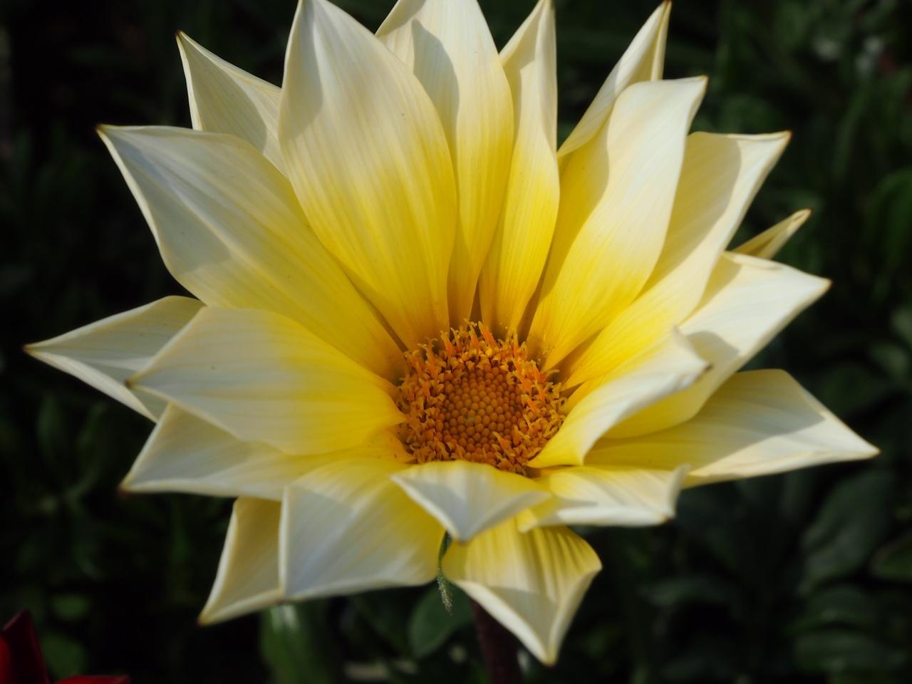 花マクロ2-05