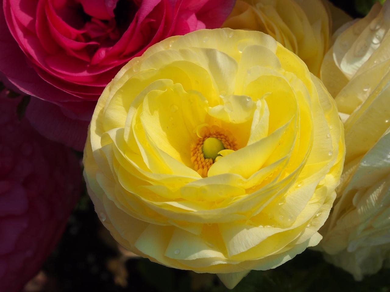 花マクロ2-06
