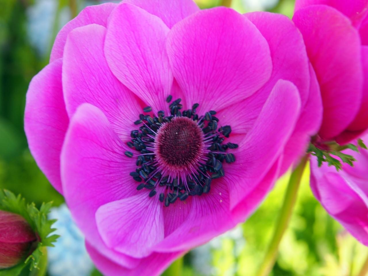 花マクロ1-06