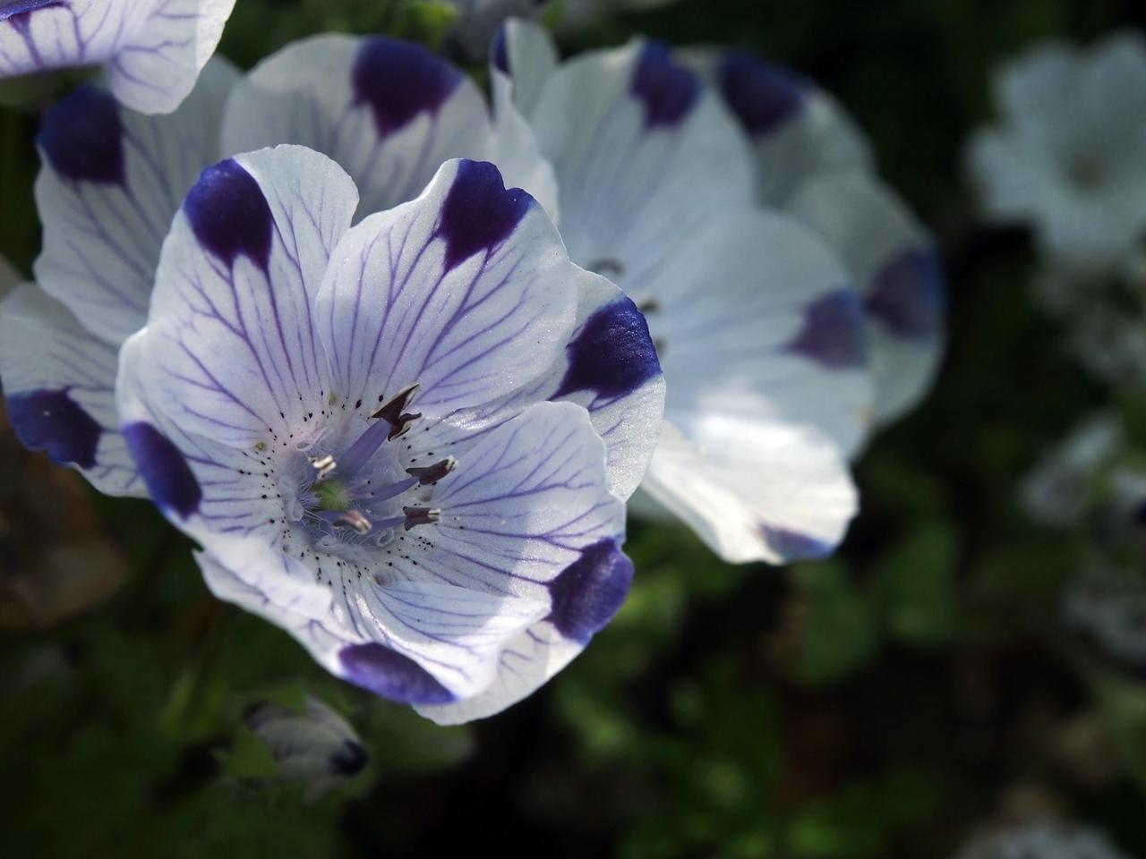 花マクロ1-07