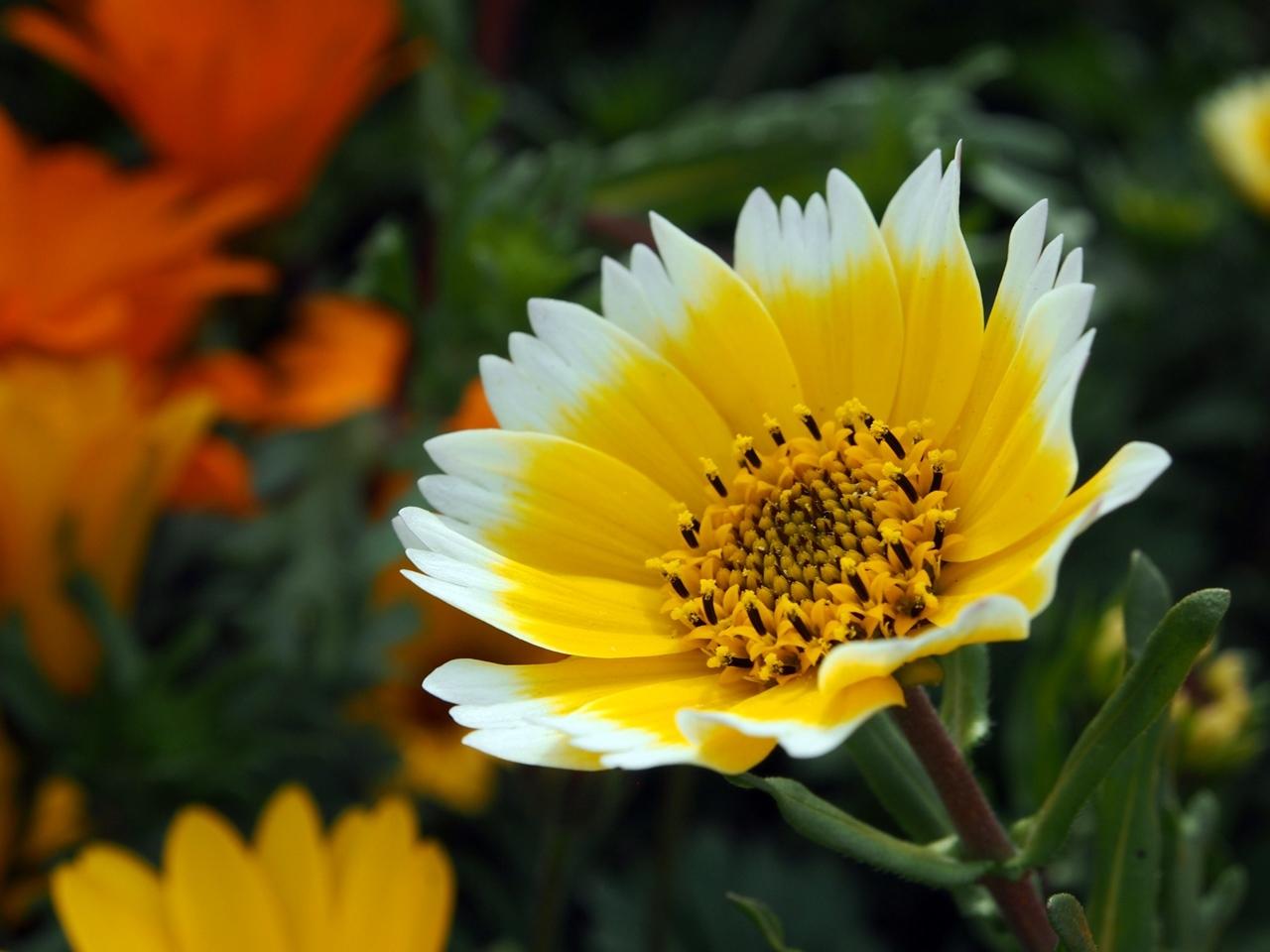 花マクロ1-08