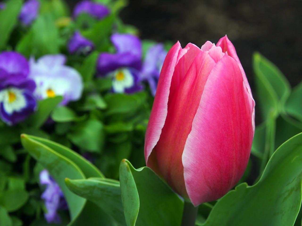 花マクロ1-09