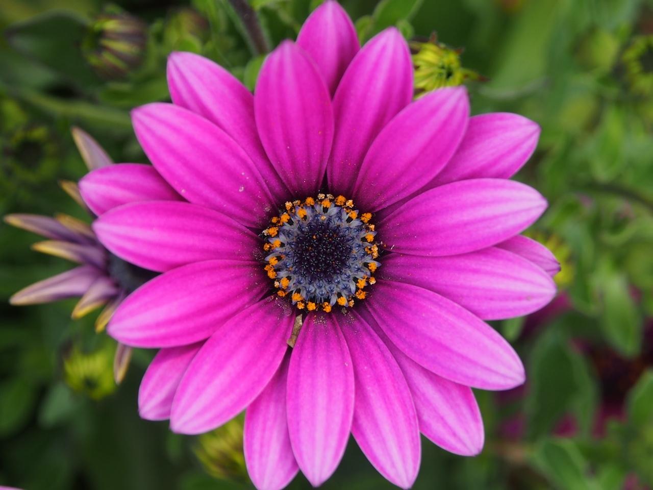 花マクロ1-10