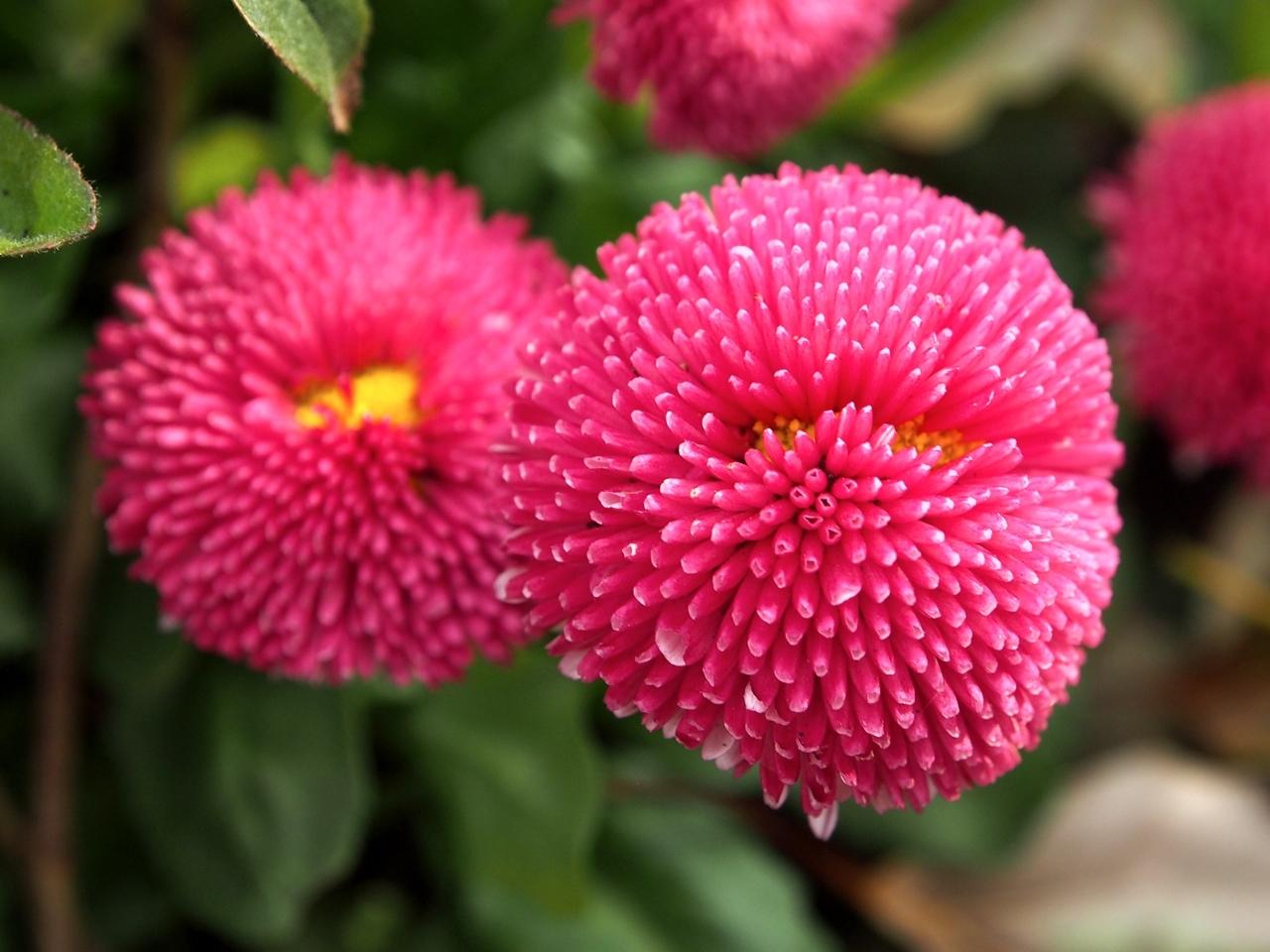 花マクロ3-09