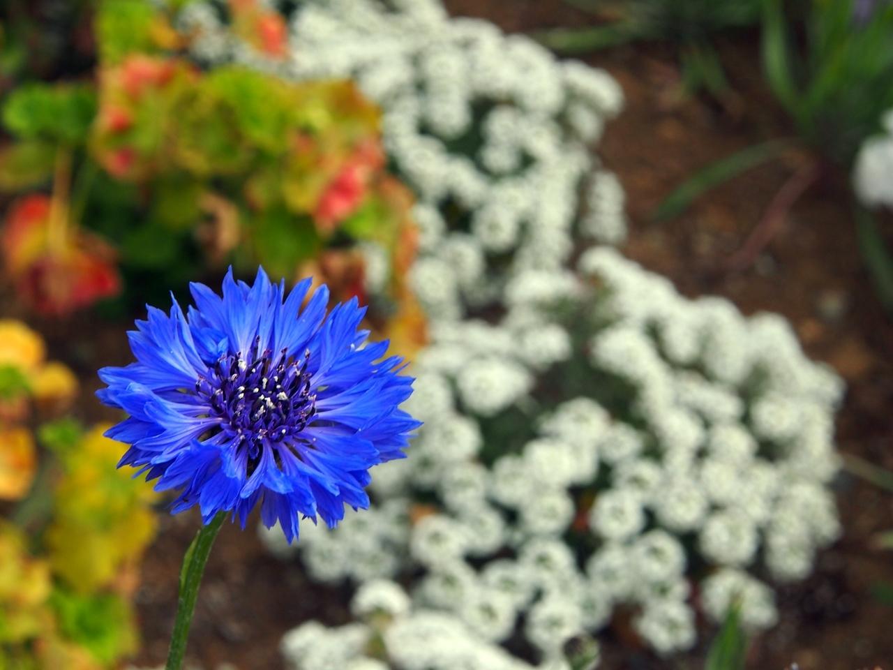 花マクロ2-08