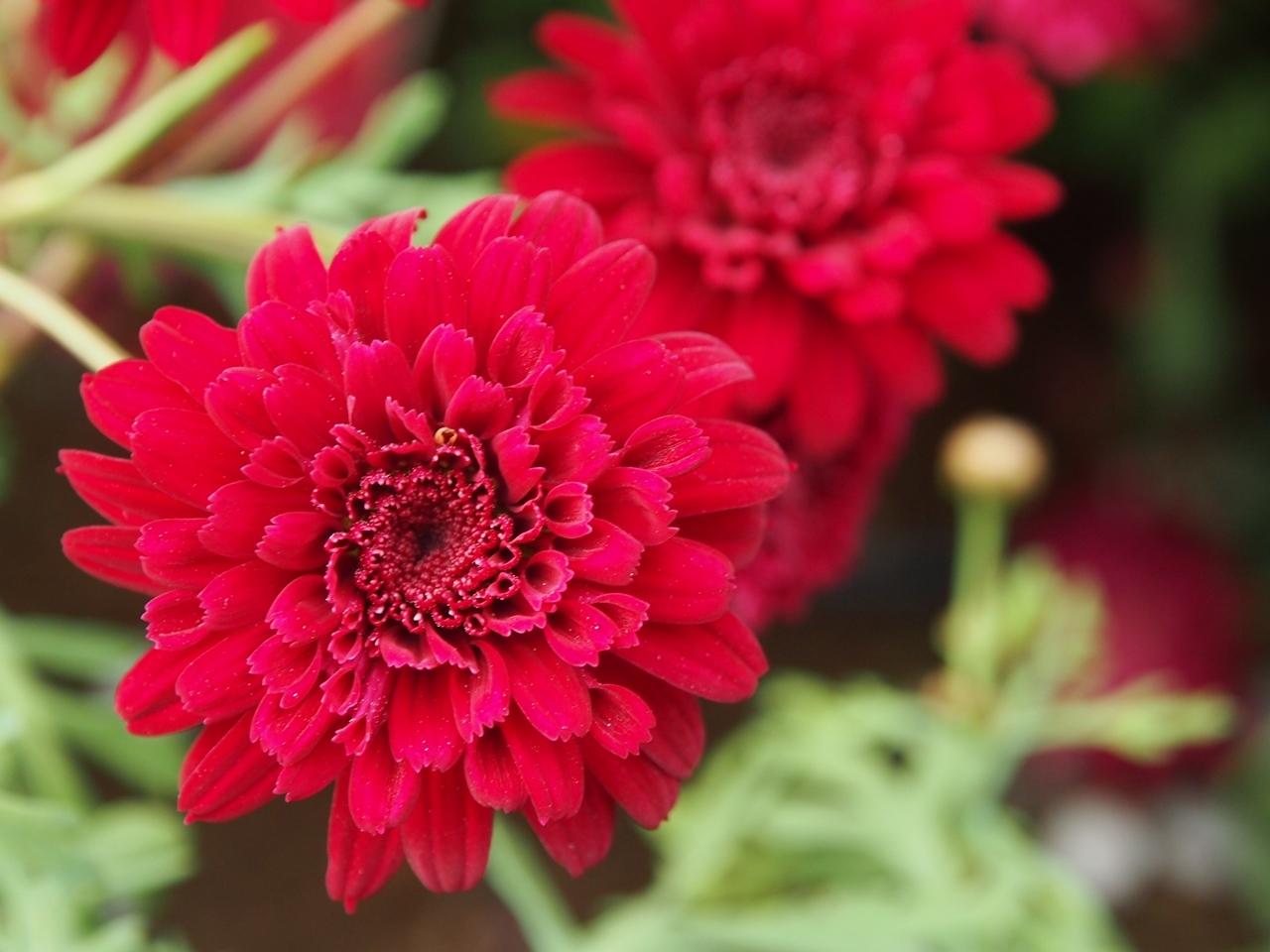 花マクロ1-12