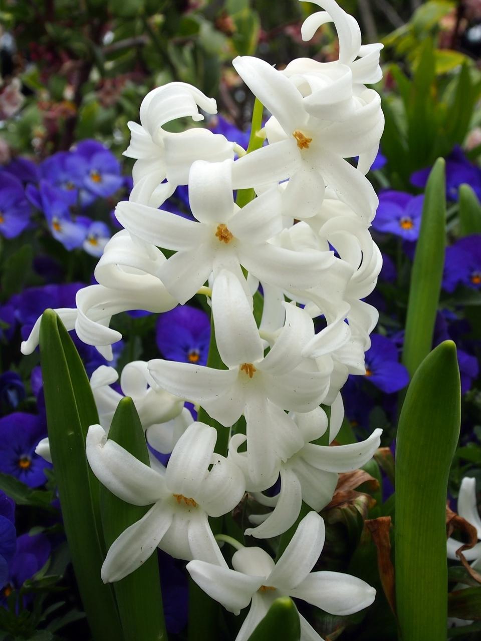花マクロ2-10