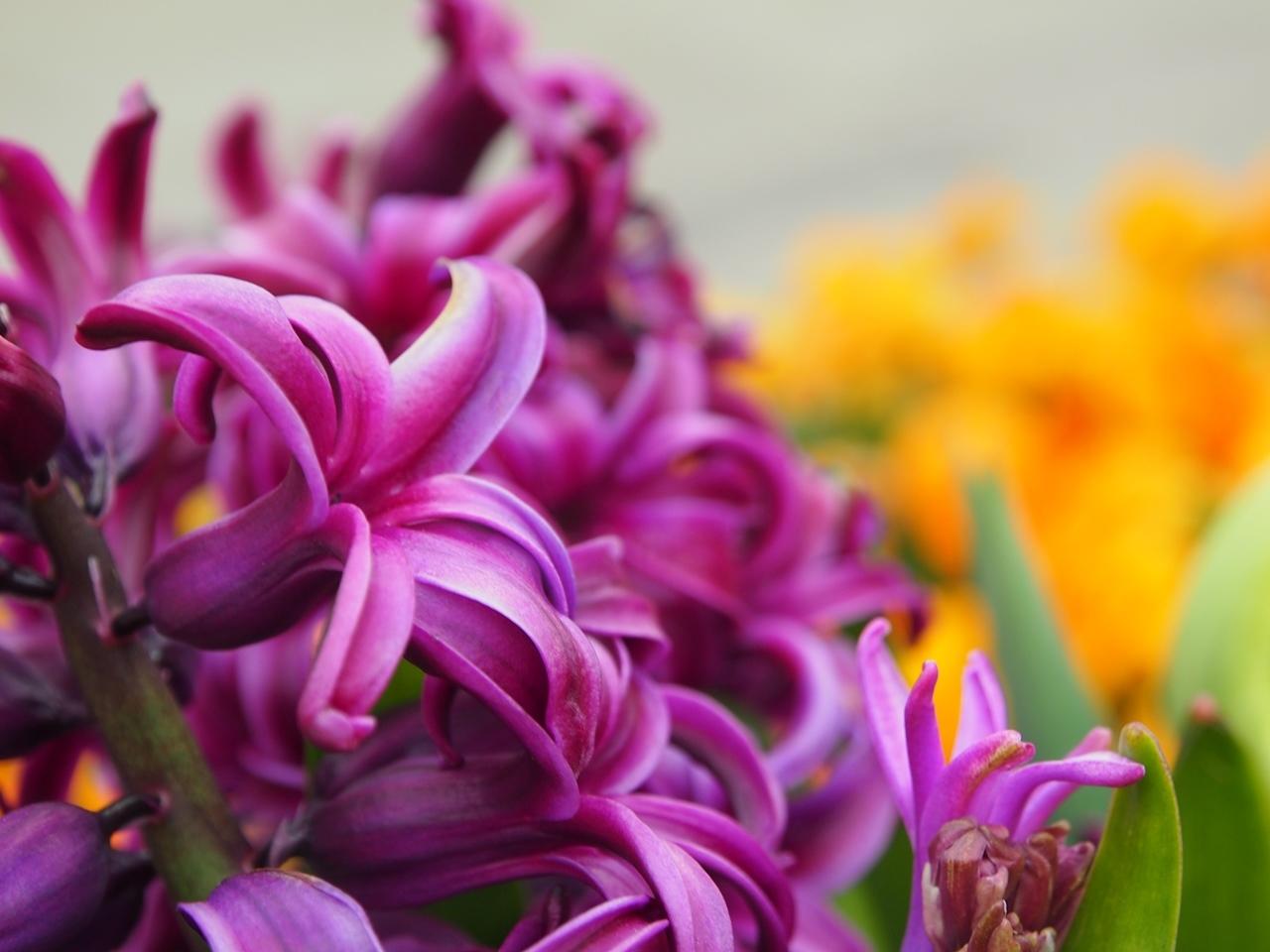 花マクロ3-11