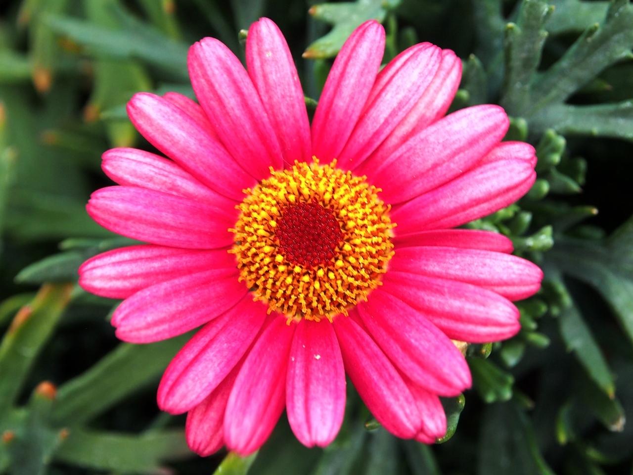 花マクロ2-11