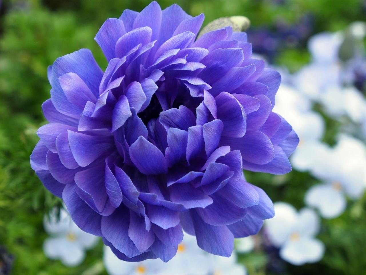 花マクロ2-12