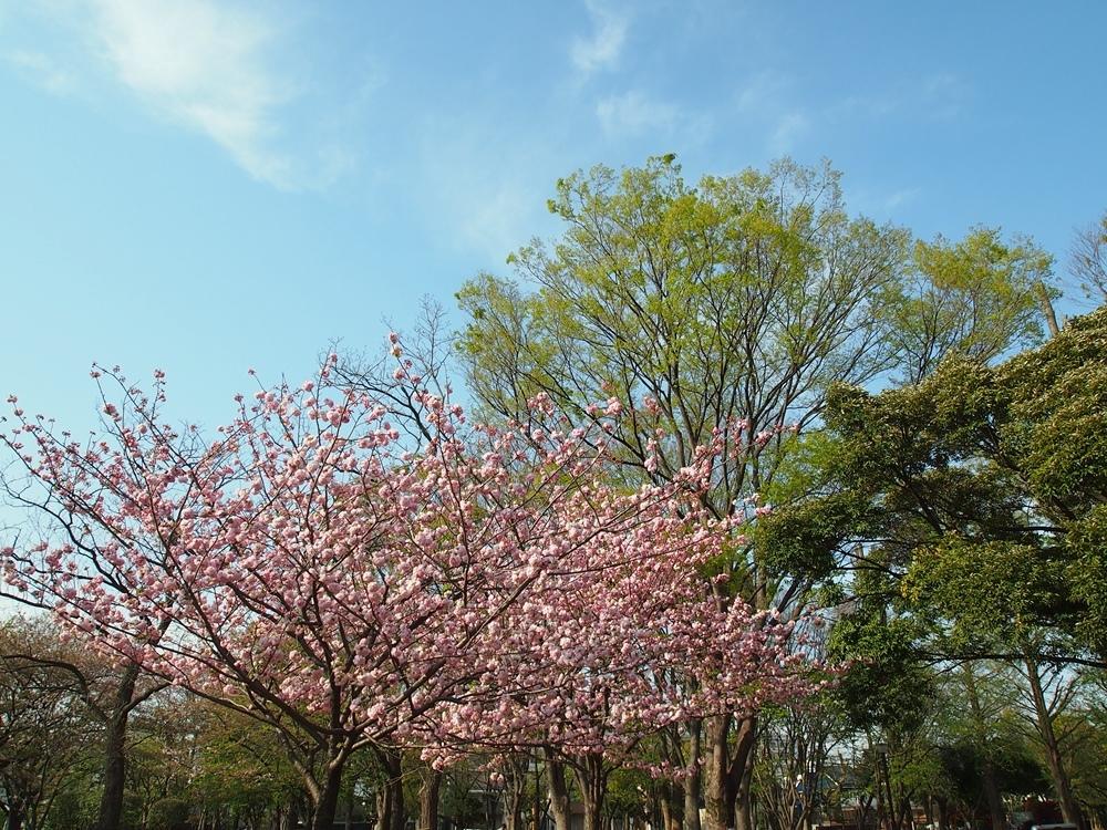 170416竹ノ塚-01