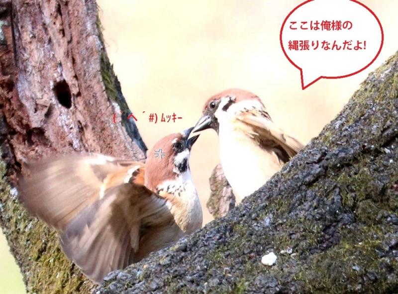 雀の喧嘩①