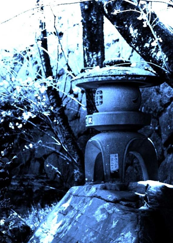 名古屋城庭①