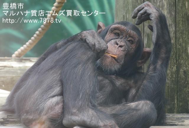 マルハナ質店エムズ買取センター チンパンジー