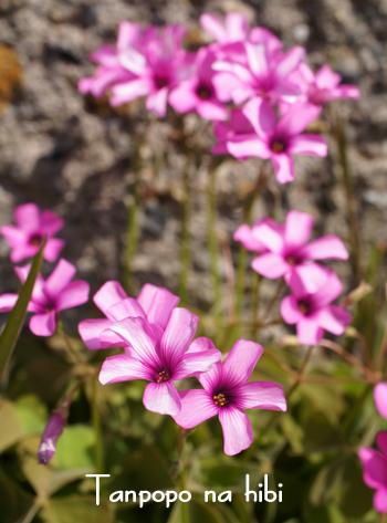 通りすがりの花