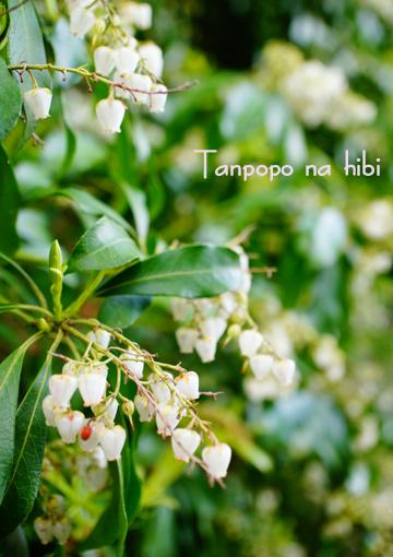 170420白い花