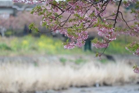 葉桜0228