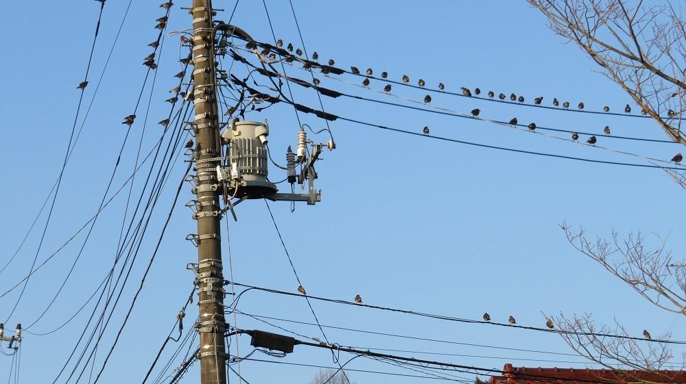 2鳥は歌うIMG_1194
