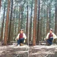 菅野すがの の森