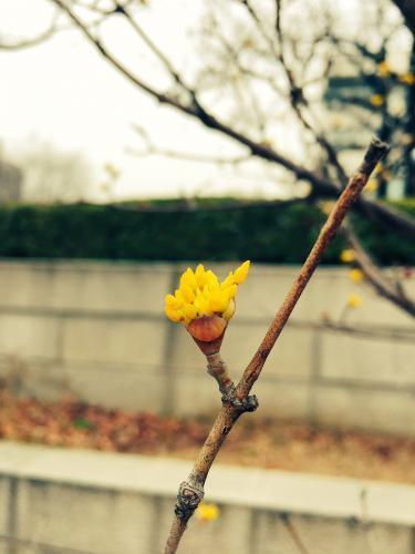 韓国にもきた。春。