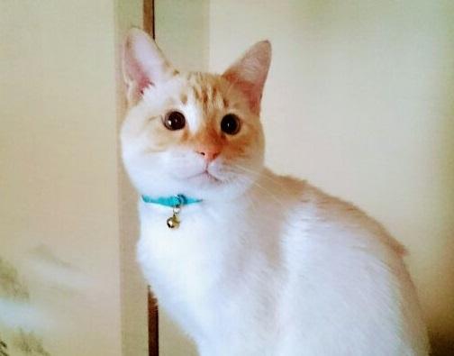 迷子猫オス 7か月