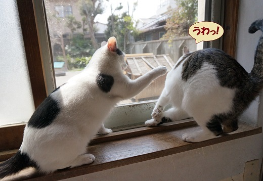 チョビ子・げんじ2