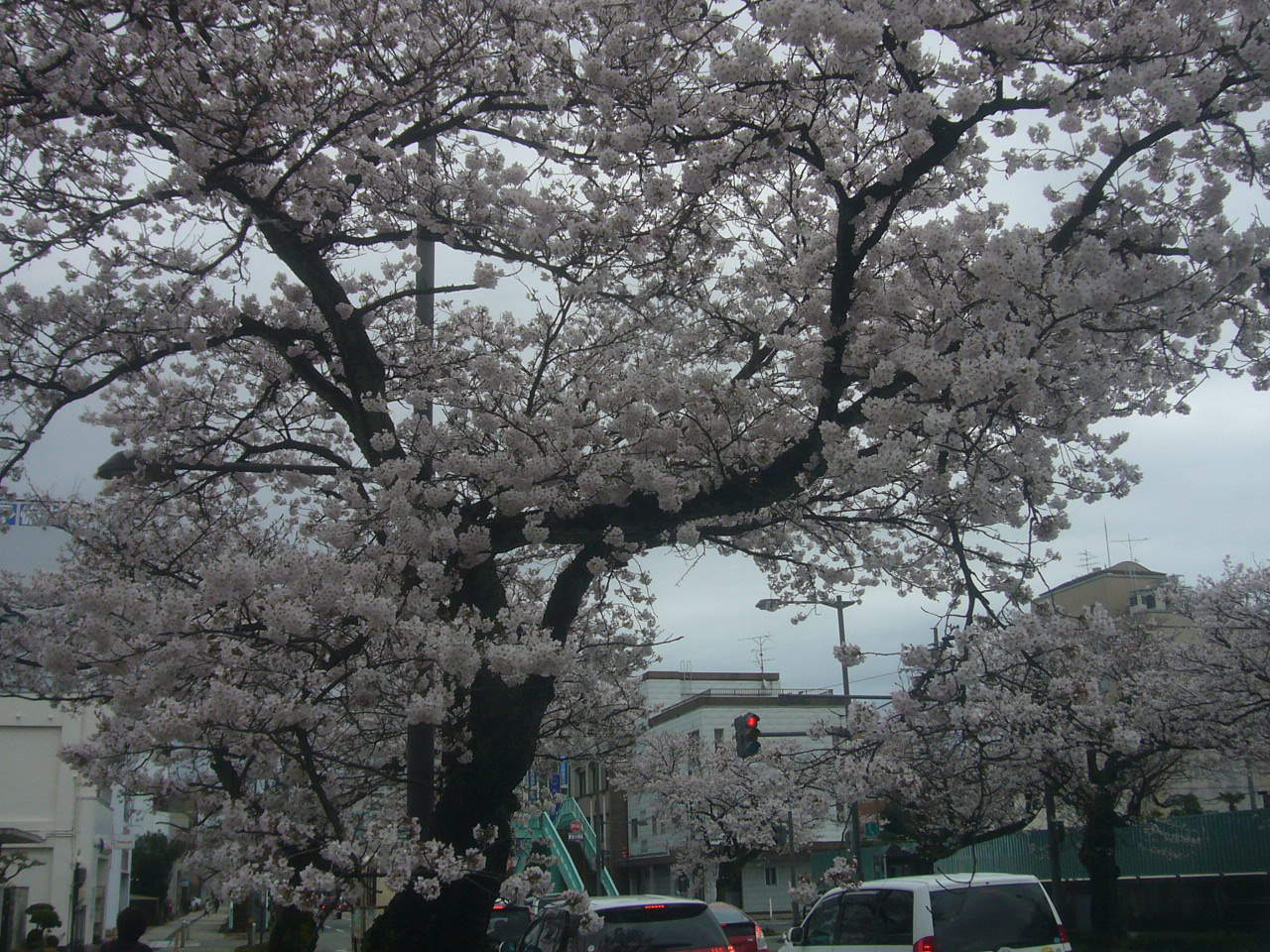 桜通り H29.4.07