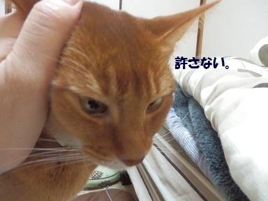 P3280135.jpg