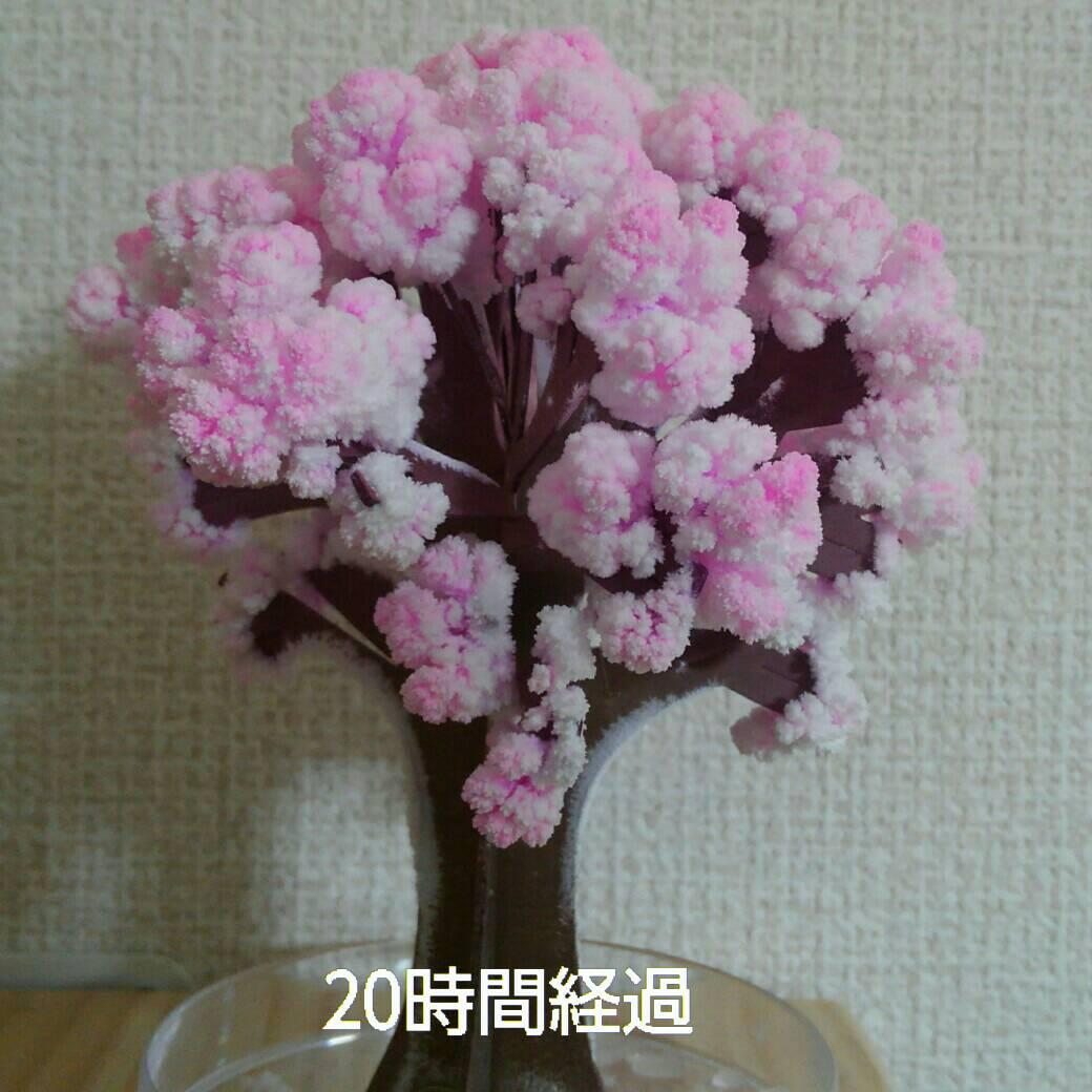 マジック桜5