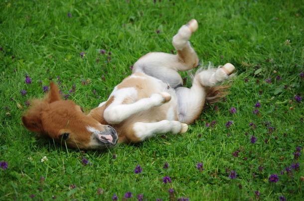 ポニーの赤ちゃんFavim_com-animal-baby-animal-baby-pony-cute-foal-345532