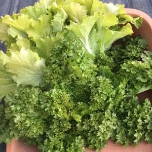 2月12日の収穫