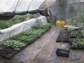 H29.4.21野菜苗仮置き場の様子@IMG_1000
