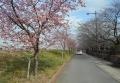 山崎公園の脇の道