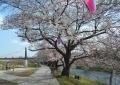 いろは親水公園(向こうに見えるのが富士下橋)