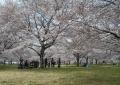 河川敷中央公園①