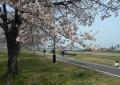 入間川サイクリングロード(向こうに見えるのは昭代橋)