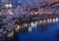 桜越しに見る対岸