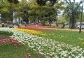 チューリップ花壇②