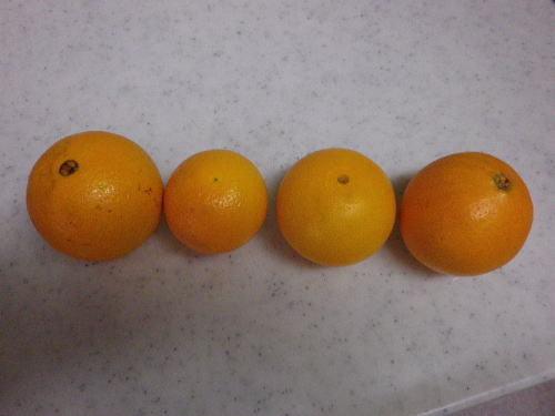 オレンジ食べ比べ 2017 2 11