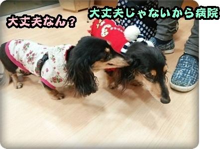 はるひマイクロ2DSC_3995